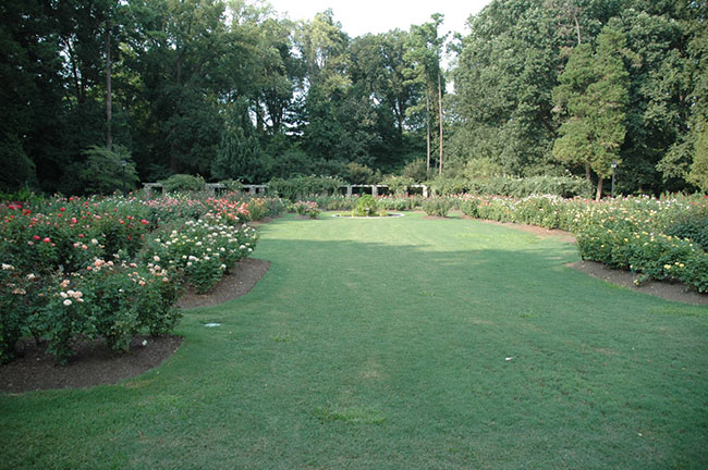 Raleigh Rose Garden