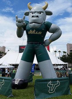 Tampa USF bulls