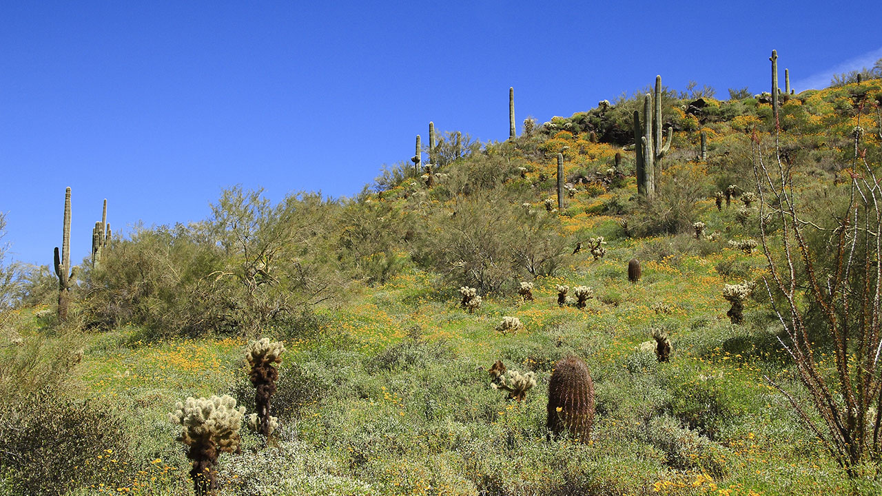 Cave Creek, Arizona Popular Cities